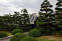 Niwaki pine tree pruning in Japan Japanese Spa, Japanese Tree, Japanese Gardens, Topiary Garden, Tree Pruning, Utila, Garden Spaces, Pine Tree, Garden Inspiration