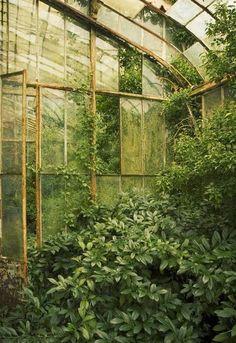 I adore decrepit conservatories - so lush!  ~Splendor