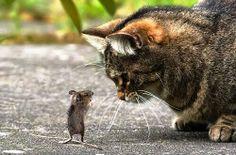 De ruina mundi: Matteo, il topolino in trappola