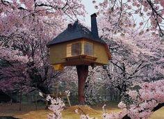 La casa sull'albero. Letteralmente.