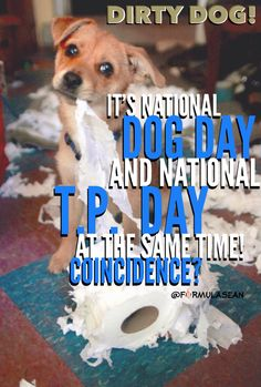 It\'s #NationalTPDay! What is your best caption for this? // National ...