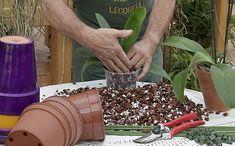 Így tartsd életben az orchideát! Gardening, Lawn And Garden, Horticulture