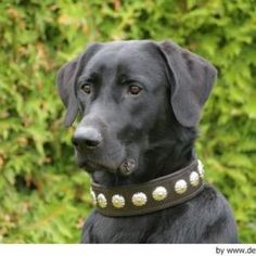 Ca de Bestiar - Perro de Pastor Mallorquín