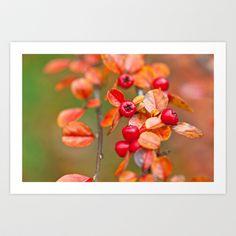 Autumnal Cotoneaster 9379 Art Print by metamorphosa - $22.88