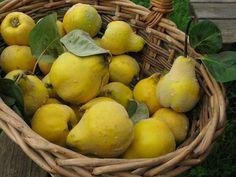 basket of quinces