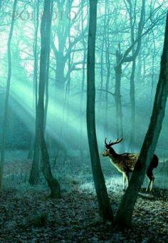 Deer in shadows.
