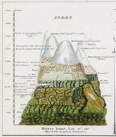 Andes by Alexander von Humboldt via terrismundi #Illustration #Science #Nature…