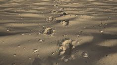 ArtStation - Shoeprints in sand, Martin Vater