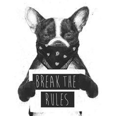 Rebel Dog Canvas Art Print by Balazs Solti Rebel, Yellow Throw Pillows, Little Bit, Canvas Prints, Art Prints, Vintage T-shirts, Dog Art, Pet Portraits, T Shirts For Women