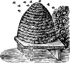 beehive images - Google Search