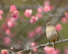「早春」の画像検索結果