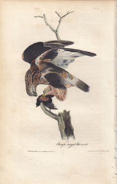 #art Rare Audubon Birds Of America Print 1st Ed 1840: ROUGH-LEGGED BUZZARD 11 please retweet