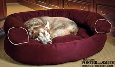 Everyone needs a good bed to sleep in, including the dog.