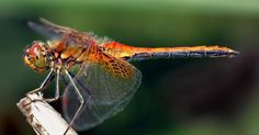 Draper is creating genetically modified, bionic, dragonfly drones who will help with pollination by using flashing lights to guide their movement. If this development seems more science fiction, that's because it does resemble an episode of Black Mirror, but hopefully without the sinister twist.