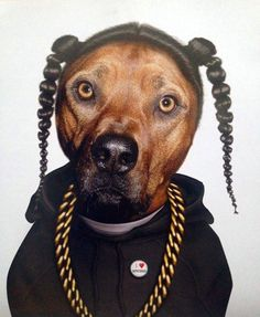 If Snoop Dogg was actually a dog.