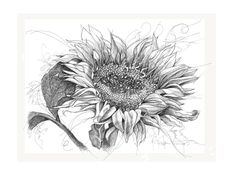 Daily Sketches by Denise Armstrong ' Here Comes The Sun '.