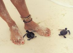 Sand and baby turtles. So cute!