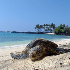 Turtle Beach, Kona, Hawaii.  Go to www.YourTravelVideos.com or just click on photo for home videos and much more on sites like this.