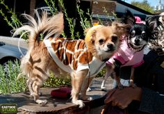 Dog Halloween Costume Party