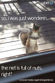 The net is full of nuts, right? #twitter #socialmedia #funnies Social Media Funnies