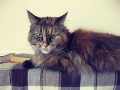 #cat #feline #pet #whiskers