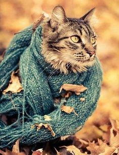 cat  autumn