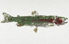 For johnny-Rainbow Trout, Cooper Landing, Alaska; a gyotaku (ink rubbing) made by using the actual fish  $14