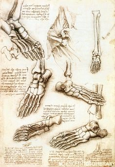 Foot anatomy by Leonardo da Vinci. Historical artwork and notes on the anatomy of the bones of the human foot, by the Italian artist and scientist Leonardo da Vinci The artworks show the foot from underneath, both sides, and above. Foot Anatomy, Anatomy Study, Anatomy Drawing, Anatomy Art, Human Anatomy, Bone Drawing, Human Figure Drawing, Figure Drawing Reference, Anatomy Reference