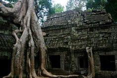 le temple nommé ta prohm. Notre article sur le Cambodge: http://www.novo-monde.com/article-cambodge.php#