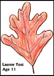 Leaf Graphic Great site with topics to explain how leaves change color, why leaves change fall, do leaves change color because of weather,. Leaves Changing Color, Autumn Leaf Color, Newsletter Ideas, Change Colour, My Father's World, Trail Guide, Environmental Education, Leaf Coloring, Nature Study