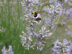 Csak ülök, de nem csak kötök Insects, Bee, Animals, Honey Bees, Animales, Animaux, Bees, Animal, Animais