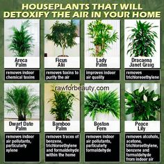 """House plants that help the air :) Not as much """"fresh"""" air from outdoors in the winter months....."""