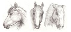 Drawing For Beginners Drawing lesson for Beginner artists: The proportions of a horse - Step 4 : Drawing the head Horse Head Drawing, Horse Drawings, Animal Drawings, Drawing Animals, Colorful Drawings, Cool Drawings, Drawing Sketches, Drawing Step, Drawing Faces