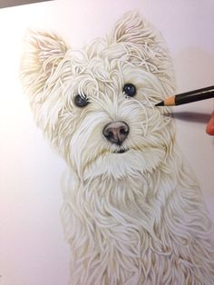 First drawing with westie.