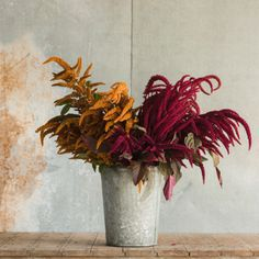 One of the most productive summer fillers you can grow, this mix includes my favorite towering varieties, 'Hot Biscuits' and 'Opopeo.' The large, richly colored Amaranth Chocolate and Cherry Mix from Floret.  These brown and burgundy-toned stems add a unique textural quality to arrangements. I grow loads of it every year and use every single stem.
