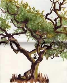 Entourage - Tree - Marker Pens