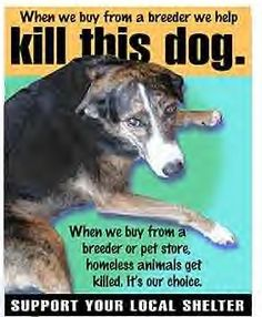 When we buy from a breeder or pet store, homeless animals get killed - it's our choice