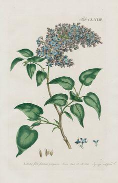 1768 Philip Miller Gardens Dictionary Botanical Prints