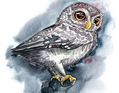 """Check out new work on my @Behance portfolio: """"Grey Watercolor Owl"""" http://be.net/gallery/47469399/Grey-Watercolor-Owl"""