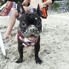 dog イヌ 犬可愛い画像まとめ http://ift.tt/1V6N6yb