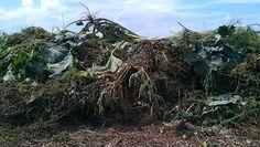 Vom lästigen Unkraut zu wertvollem Kompost