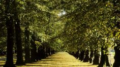 Clumber Park - play park and walks