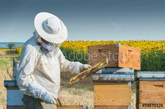 Which Completely Random Job Would You Actually Be Good At? - Apply within. - Quiz I got bee keeper! Bee Supplies, Raising Bees, Quiz Me, Fun Quizzes, Bees Knees, Bee Keeping, The Great Outdoors, Good Things, Things To Sell
