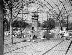 A view of the Audubon Zoo Flight Cage in the 1930s