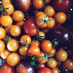 From my garden today! #tomato #tomatoesofinstagram #urbanfarming #urbanagriculture #communitygarden #urbanmeadow #brooklyn #vscocam