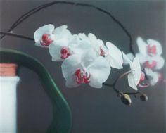 GERHARD RICHTER Orchid II, 1998