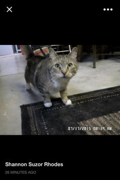 Laure Picone BoudreauEnfield CT Open Forum https://www.facebook.com/CT.Lost.Pets/posts/766648523457025   Anyone seen him please let me know , he has never gone missing over 9 yrs .. We are heartbroken tabby and white