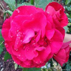 Quatro Estações » Flores: 7 on 7 - Quatro Estações
