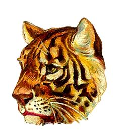 Antique Images: Tiger Profile Digital Clip Art of Animal Image Victorian Die Cut