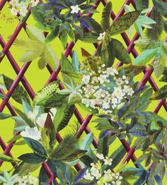 Canopy Wallpaper by Christian Lacroix | Jane Clayton